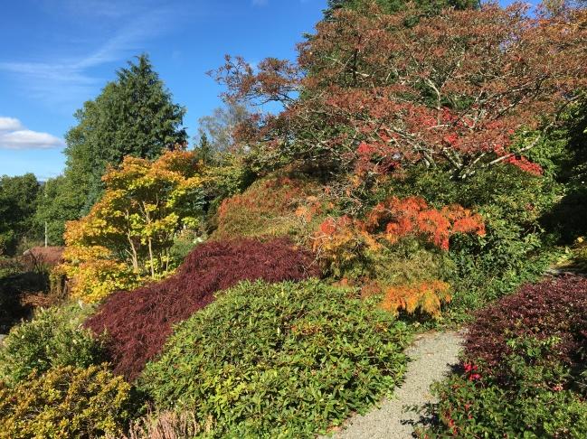 Autumn colour at Holehird Gardens