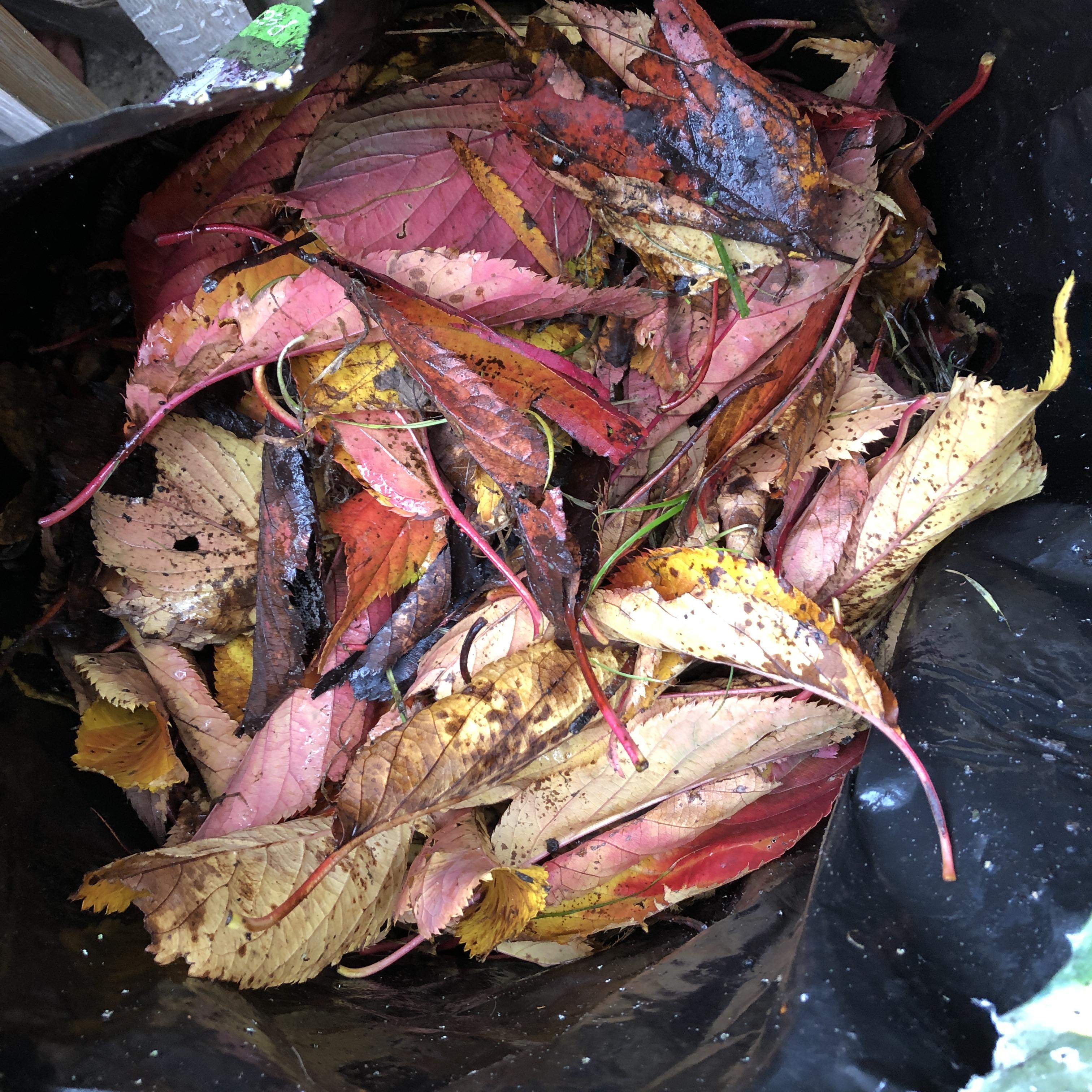 Bag of Fallen Leaves